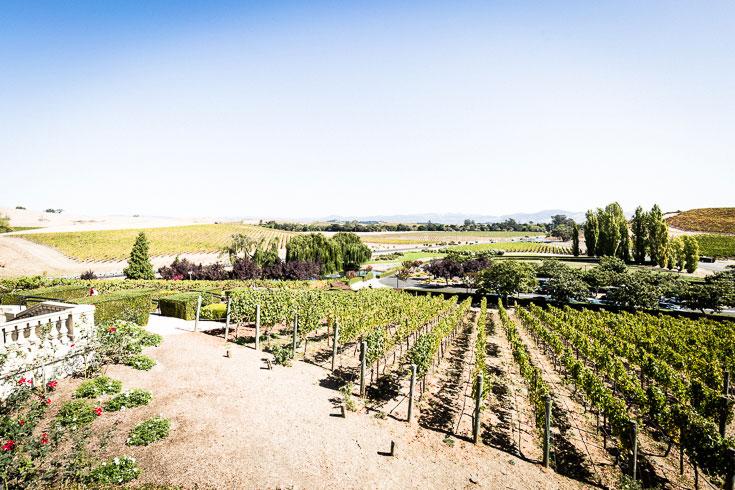 Domaine Carneros napa vinyard