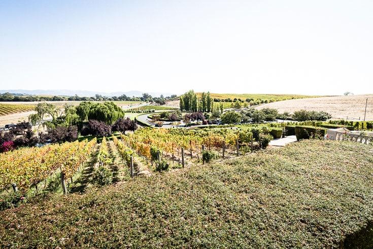 domaine carneros vinyard near napa