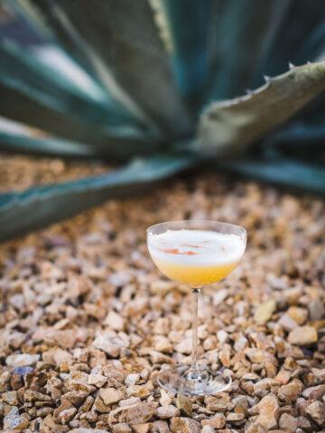 mezcal sour cocktail outdoors 2