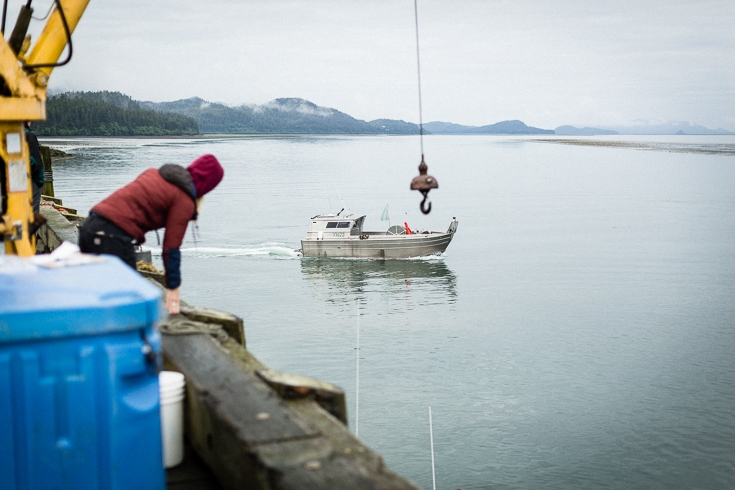 the copper river salmon harvest